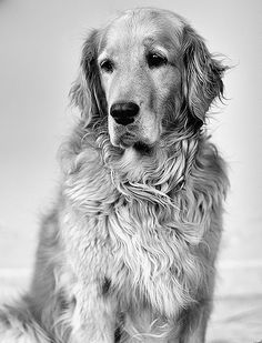 Great black and white canine portrait.