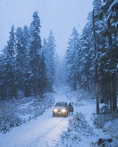 Night Forest, Forest Road, Winter Love, Winter Is Coming, Winter Walk, Snowy Pictures, Winter Magic, Winter's Tale, Winter Beauty