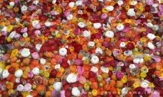 ranunculus Ranunculus, Vegetables, Spring, Summer, Summer Time, Persian Buttercup, Vegetable Recipes, Veggies