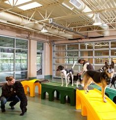 Olde Towne Pet Resort Dulles - Dogs hanging out in the Daycare area - by Animal Arts Design Studios