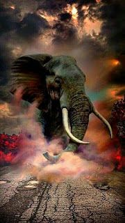 Cb background and png: 100 best hair png backgrounds for picsart 2019 Desktop Background Pictures, Studio Background Images, Black Background Images, New Backgrounds, Elephant Love, Elephant Art, Elephant Tattoos, African Elephant, Wild Elephant