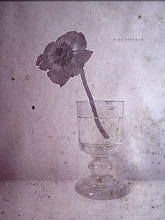 Dusty Purple, Dusty Rose, Lilac, Lavender, Pink, My Flower, Flowers, Colour Board, Pretty Little