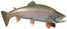 Printable Trout Stencil - - Yahoo Image Search Results