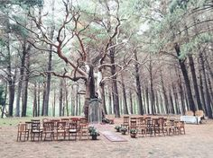 Burbrook Forest Wedding in Kuitpo Forest, South Australia. Styling setup by Old Refinery