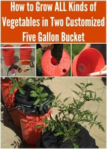 How to Grow ALL Kinds of Vegetables in Two Customized Five Gallon Buckets @diyncrafts
