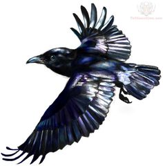 Flying Raven Tattoo Design