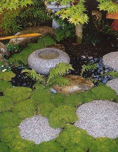 Japanese garden.  I hope my moss fills in this beautifully