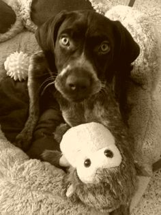 Mi perro tiene un Blog ! : La educación de un perro