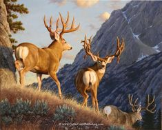 """For more sizes and prices on """"Into the Shadows"""", click on the arrow below -mansanarez Wildlife Art by Tom Mansanarez, limited edition prints featuring elk, deer, antelope, moose, cats, cougar, mountain lion, hounds, horses, and bobcats. - Limited Edition Giclee Canvas Reproductions by Tom Mansanarez"""