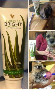 Dogs love aloe too ...