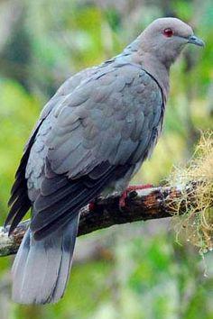 All Birds, Love Birds, Beautiful Birds, Dove Pigeon, Online Photo Gallery, Colorful Birds, Bird Watching, Beautiful Creatures, Bird Houses