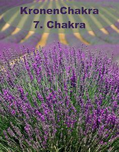 Farbe = violet Element = Spiritualität Aromen = Weihrauch, Lotus Steine: Amethyst, violetter Fluorit, Sugilith Chakra, Lotus, Plants, Incense, Woodland Forest, Stones, Colour, Lotus Flower, Chakras