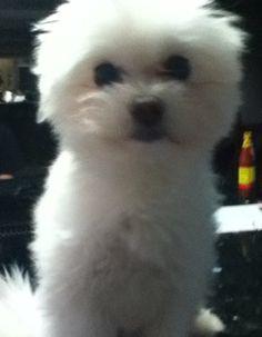 My dog, tugger!!!