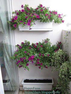 treo tường Plastic Planter, Planters, Plants, Pot Holders, Pots, Container Plants