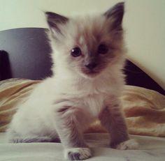 baby cat, so cutee ♥