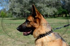 3 Rows #Leather Spiked and Studded #Dog #Collar $49.90 | www.all-about-german-shepherd-dog-breed.com