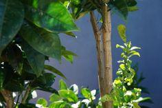 Orange Tree on Gray Background Gray Background, Me As A Girlfriend, Orange, Nature, Plants, Photography, Art, Art Background, Naturaleza