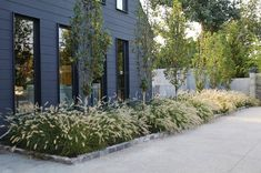 If the color pallet of your home's exterior is in the darker range, create drama with the contrasting foliage of 'Hameln' Dwarf Fountain Grass (Pennisetum alopecuroides 'Hameln'). (zones 4 to Farmhouse Landscaping, Modern Landscaping, Front Yard Landscaping, Backyard Landscaping, Landscaping Ideas, Landscaping With Grasses, Farmhouse Garden, Landscaping Software, Arizona Landscaping