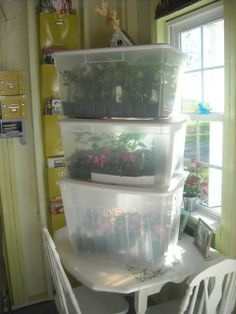 how to make mini greenhouse with ice chest - Google Search