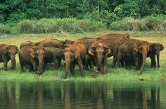 India Wildlife Journey to Explore a Wildlife of India