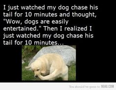 """I just watched my dog chase his tail for 10 minutes and thought, """"Wow, dogs are easily entertained.""""  Then I realized I just watched my dog chase his tail for 10 minutes..."""