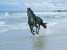 Adevarul si puterea merg rar impreuna | Poze cu cai frumosi