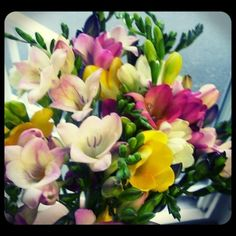 Freesia!  Roberts Flowers of hanover, Hanover, NH