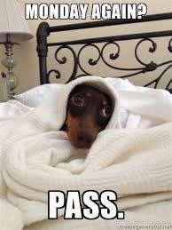 My Doxie every morning