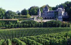 Bordeaux, France, La Riviere Fronsac vineyard