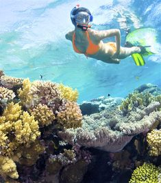 One of the most beautiful experiences ever in life. Coral Reefs, Red Sea, Underwater, Egypt, Most Beautiful, Life, Holiday Photography, Scubas, Snorkeling