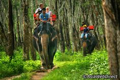 ride elephants in Phuket