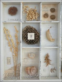nature collection includes a wasp nest . Ideas for cigar box shadow box Arte Assemblage, Pot Mason, Girls Dollhouse, Cabinet Of Curiosities, Nature Collection, Nature Table, Nature Journal, Displaying Collections, Nature Crafts