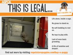 We are dedicated to educating people about #puppymills. We believe that creating awareness by spreading the word about our mission can help put an end to the cruel commercial dog breeding industry. We ask for your support. Please join us: https://www.facebook.com/saynotopuppymills