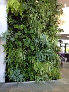 Verticaal groen, het blijft een favoriet! Weinig ruimte, toch groen toevoegen? Dan is ene groene muur altijd een goed idee. Verticle Garden Wall, Vertical Garden Design, Outdoor Plants, Outdoor Gardens, Garden Cafe, Interior Garden, Plant Wall, Tropical Garden, Houseplants