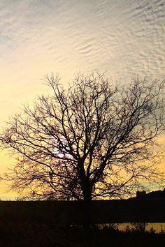 Sunsets & nature #nature #photography #sunset