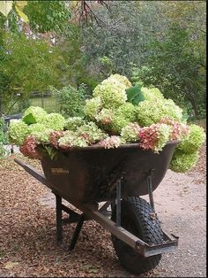 Gonna steal my husband's wheelbarrow to put pumpkins and mums this fall