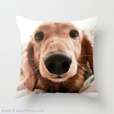 """Dachshund, Dog Photograph 16"""" x 16"""" Throw Pillow Cover - Photography, Doxie, Dach, Doxies, Weiner, Sausage, Whimsical, Puppy, Bright, Home. $35.00, via Etsy."""