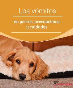 Los vómitos en perros: precauciones y cuidados Los vómitos en perros son algo muy común, pero es importante tomar una serie de medidas y precauciones para que no vayan a más. He aquí unos consejos. #salud #perro #preocupación #vómito