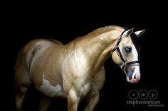 Horse / Beautiful CW River of Gold (Crosswind Farm)