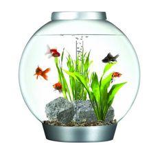 biorb aquarium. cool biorb tanks. i have the large one. love it. I have the large biorb