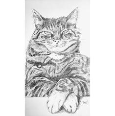 #cat #drawing #pencil #art #scetch Pencil Art, Pencil Drawings, Cat Drawing, Cats, Animals, Pencil, To Draw, Kunst, Gatos