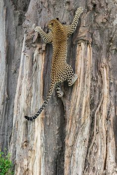 Photograph Get me a ladder!! by Marc MOL on 500px