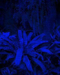 Namsa Leuba - Plante Droite Bleu