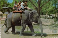 San Antonio Zoo...This used to be so exciting for us, even my son got to ride before they quit having the rides. When I was a kid, it cost 10 cents.