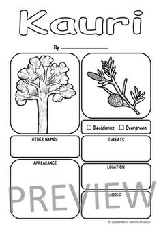 New Zealand Trees Report Templates by Suzanne Welch Teaching Resources Writing Resources, School Resources, Teaching Resources, Information Report, Tree Information, Spelling Words, Sight Words, Outline Pictures, Story Starters