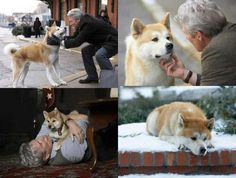 Hachiko ~A dogs love~ Hachi A Dogs Tale, Cute Puppies, Dogs And Puppies, Doggies, A Dog's Tale, Sad Movies, Akita Dog, Richard Gere, Pets