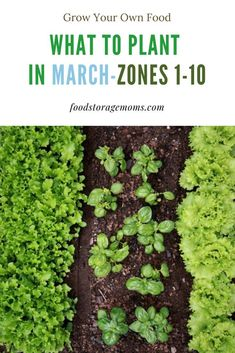 10 Vegetable Seeds You Should Plant In March - Food Storage Moms - Let's grow our own food, we can do this! I show you how to improve your soil, plant seeds, and have a great garden! When To Plant Vegetables, Growing Veggies, Planting Vegetables, Organic Vegetables, Growing Plants, Planting Seeds, Gardening For Beginners, Gardening Tips, Gardening Supplies
