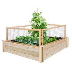 x 4 ft. Original Cedar Raised Garden Bed with CritterGuard Fence - The Home Depot - Greenes Fence 4 ft. x 4 ft. Original Cedar Raised Garden Bed with CritterGuard Fence Sys - Wood Raised Garden Bed, Raised Garden Planters, Cedar Garden, Building A Raised Garden, Raised Beds, Raised Patio, Raised Gardens, Garden Fences, Potager Garden
