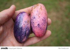 Safou'nun bir diğer adı tereyağı meyvesi. Çünkü Afrika'ya ...
