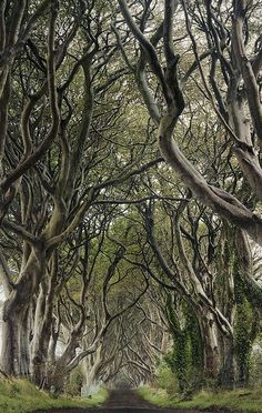 Dark Hedges, County Antrim, Northern Ireland. I could pin different shots and angles of these trees all day long!